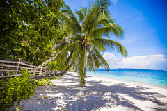 Coconut Palm tree on the white sandy beach Stock Photo