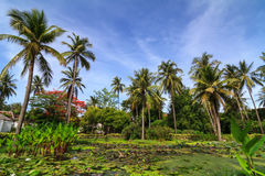 Coconut palm tree and white waterlily in the tropi Royalty Free Stock Photos