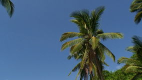 Coconut palm trees stock video footage