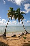 Coconut Palm Trees. Hot Summer Day in Dominican Republic royalty free stock photography