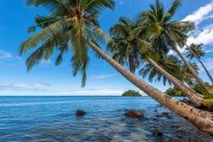 Free Coconut Palm Trees Stock Photo - 49680550