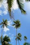 Coconut palm trees against blue sky Stock Photos