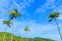 Coconut palm trees against blue sky background Stock Photo