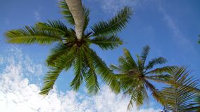 Coconut palm trees against blue sky stock footage
