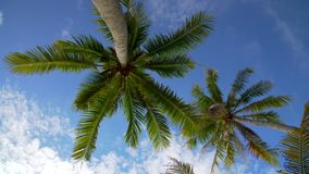 Coconut palm trees against blue sky stock video footage