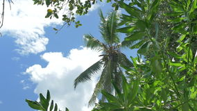 Coconut palm trees against blue sky. Tropical palm brunch with sky background stock video footage