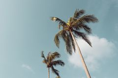 Coconut palm trees against the blue sky with vintage color filter.  stock images