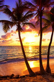 Coconut palm trees against colorful sunset in Saona island. Cari Stock Images