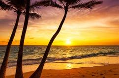 Coconut palm trees against colorful sunset. In Saona island. Caribbean sea, Dominican Republic Stock Image