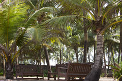 Coconut palm trees against the sky. GOA India beach. Branches of coconut palms under blue sky Stock Photo