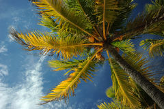 Free Coconut Palm Trees At Empty Tropical Beach Stock Photo - 40711090
