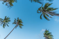 Coconut palm trees at the beach Stock Image