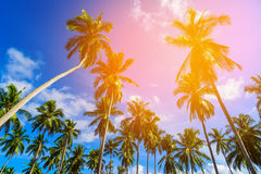 Coconut palm trees on beach and blue sky with cloud background. Stock Photography