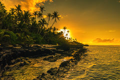 Coconut palm trees on beach during the sunrise on Upolu, Samoa I Royalty Free Stock Images