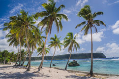 Coconut palm trees at the beach Royalty Free Stock Images