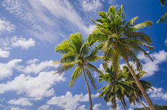 Coconut palm trees at the beach Stock Images