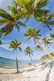 Coconut palm trees at the beach Stock Photos