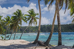 Coconut palm trees at the beach Royalty Free Stock Photo