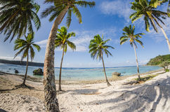 Coconut palm trees at the beach Royalty Free Stock Photos