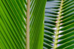Coconut palm trees, beautiful tropical background. royalty free stock image