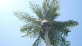 Coconut palm trees on blue sky. Background stock footage
