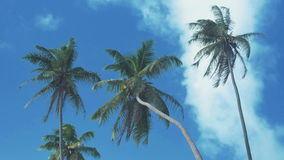 Coconut palm trees on blue sky background. Palm trees on a background of a beautiful blue sky with white clouds stock video footage