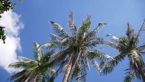 Coconut palm trees on blue sky. Background stock video