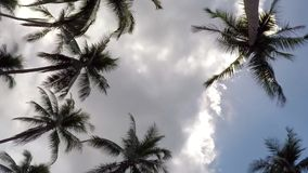 Coconut Palm Trees in Blue Sky with Gloomy Clouds. Timelapse. Koh Samui, Thailand. HD, 1920x1080 stock footage
