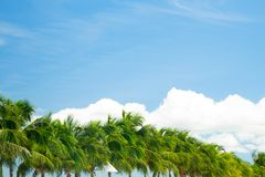 Coconut palm trees on blue sky. Tropical coconut palm trees on blue sky stock photos
