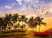Coconut palm trees on colorful sun set Royalty Free Stock Photography
