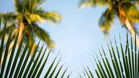Coconut palm trees crowns against blue sunny sky perspective view from the ground. Tropical travel background landscape at paradise coast. Summer beach nature stock footage