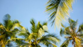 Coconut palm trees crowns against blue sunny sky perspective view from the ground. Tropical travel background landscape at paradise coast. Summer beach nature stock video