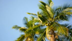 Coconut palm trees crowns against blue sunny sky perspective view from the ground. Tropical travel background landscape at paradise coast. Summer beach nature stock video footage