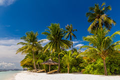 Coconut palm trees at a dreamy beach. Coconut palm trees at Maldives in front of dramatic sky Stock Image