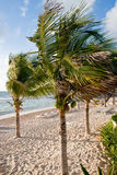 Coconut Palm Trees on Early Morning Beach Royalty Free Stock Images