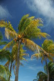 Coconut palm trees at empty tropical beach Stock Images