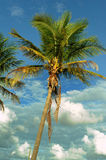 Coconut palm trees at empty tropical beach Stock Photo