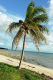 Coconut palm trees at empty tropical beach Stock Image
