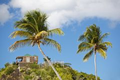Coconut Palm Trees On Blue Sky, Antigua. Coconut palm trees in front of blue sky and a bungalow on top of a hill Stock Images