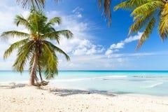Coconut palm trees grow on white sandy beach. Caribbean Sea, Dominican republic, Saona island Royalty Free Stock Images