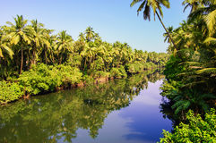Coconut palm trees growing along the small river, India. Coconut palm trees growing along the small river, blue sky and bright tropics of India Royalty Free Stock Photos