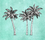 Coconut palm trees Stock Image