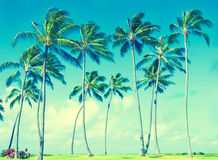 Coconut Palm trees in Hawaii (vintage style) Stock Photos