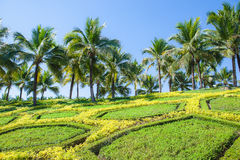 Coconut palm trees on hill Stock Photos