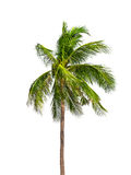 Coconut palm trees isolated Stock Photos