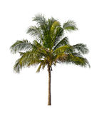 Coconut palm trees isolated on a white Royalty Free Stock Images