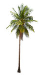Coconut palm trees isolated on white background. Stock Photos