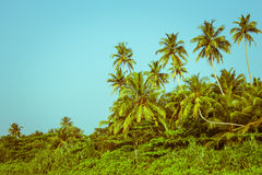Coconut palm trees and mangrove in tropics Stock Images