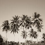 Coconut palm trees and mangrove in tropics Royalty Free Stock Image