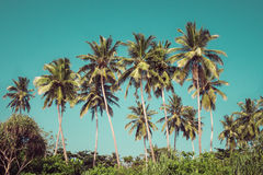 Coconut palm trees and mangrove in tropics Stock Photography